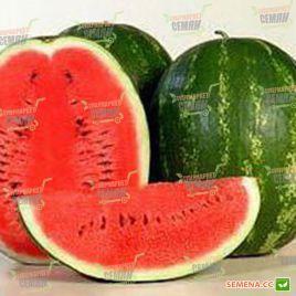 Каристан F1 семена арбуза тип Кримсон Свит среднераннего 80-62 дня 8-12 кг (Syngenta)