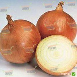Хилтон F1 семена лука репчатого раннего 85-90 дн. 120 гр (Syngenta)