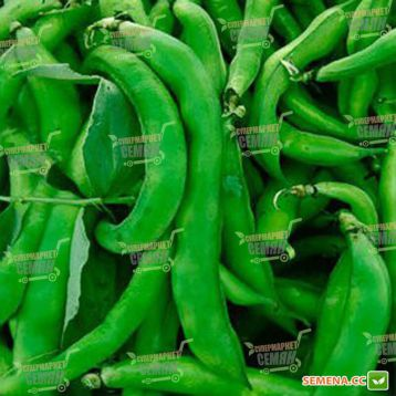 Кларон семена фасоли спаржевой (Syngenta)