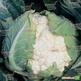 Кортес F1 семена капусты цветной средней 75-78 дн. 2-3 кг бел. (Syngenta)
