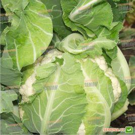 Лекану F1 семена капусты цветной средней 75-80 дн. 2-3 кг бел. (Syngenta)