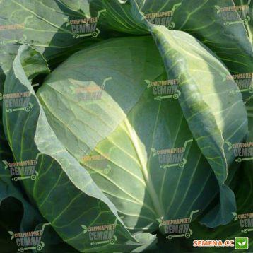 Либератор F1 семена капусты б/к поздней (Syngenta)