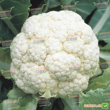 Ливингстон F1 семена капусты цветной ранней 55-60 дн. 1-1,2 кг бел. (Syngenta) НЕТ ТОВАРА