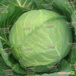 Миррор F1 семена капусты б/к ультраранний 47-49 дн 1-1,2 кг окр. (Syngenta)