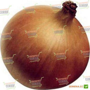 Мундо семена лука репчатого позднего 125-130 дн. 160-200 гр. желтого (Syngenta)