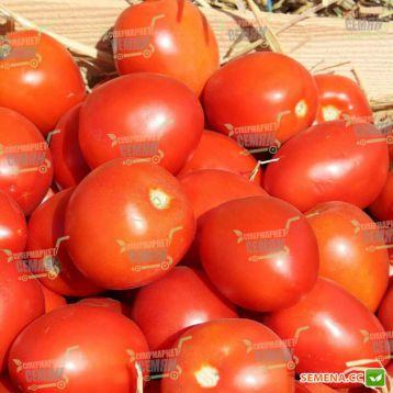 Намиб F1 семена томата дет. (Syngenta)