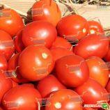 Намиб F1 семена томата дет. раннего 55-60 дн. слив. 110-120 гр. красный (Syngenta)