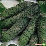 Пасалимо F1 семена огурца корнишона партенокарп. раннего 40-42 дн. 8-10 см (Syngenta)