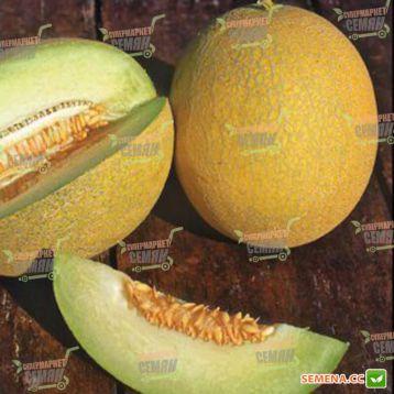 Примал F1 семена дыни тип Ананас ранней 70-75 дн. 1,2-1,8 кг окр. оран./крем. (Syngenta) НЕТ ТОВАРА