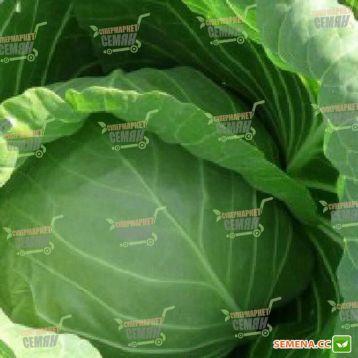 Реактор F1 семена капусты б/к ранней (Syngenta)