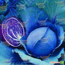 Ребол F1 семена капусты к/к ранней 70 дн. 1,5 кг (Syngenta)