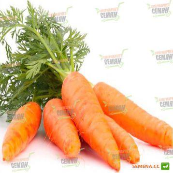 Редко семена моркови Шантане (Syngenta)