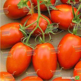 Сафаикс F1 семена томата дет. среднеранн. 65-70 дн. слив. 50-70 гр. (Syngenta)
