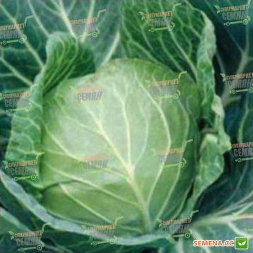 Санторино 60 F1 семена капусты б/к ультраранней (Syngenta)