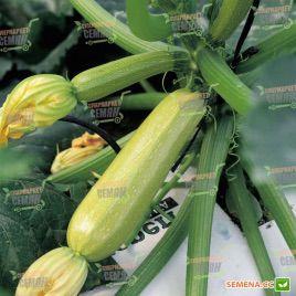 Серена F1 семена кабачка раннего 40дн. светло-зеленого (Syngenta)
