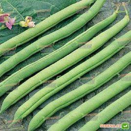 Серенгети семена фасоли спаржевой кустовой ранней зел. (Syngenta)