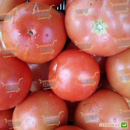 Силует F1 насіння томату напівдет. (Syngenta)