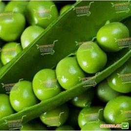 Сомервуд семена гороха овощного мозгового среднепозднего до 65 дн (Syngenta)