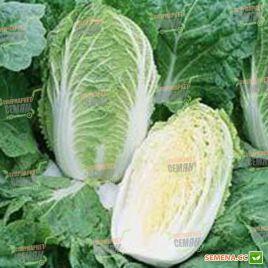 Спринкин F1 семена капусты пекинской ранней 55-60 дн. 2 кг (Syngenta)