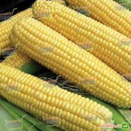 Свитстар F1 семена кукурузы суперсладкой (Syngenta)