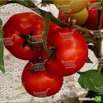 Т-97082 (Квалитет) F1 семена томата полудет. (Syngenta)