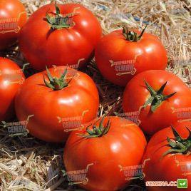 Терра Котта F1 семена томата дет. среднеранн. 65-70 дн. окр. 180 гр. (Syngenta)