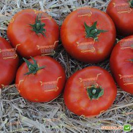 Терра Котта F1 семена томата дет. среднеранн. 65-70 дн. 180 гр. (Syngenta)