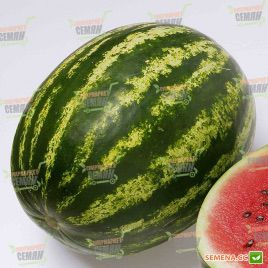 Топ Ган F1 семена арбуза тип Кримсон Свит 62-64 дн. 8-10 кг (Syngenta)