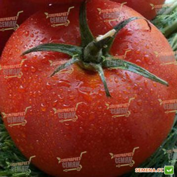 Царин F1 семена томата индет. ранний 80-85 дн. окр.-припл. 200-250 гр. красный (Syngenta) НЕТ ТОВАРА