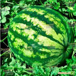 Бостана F1 семена арбуза тип Кримсон Свит (Syngenta)
