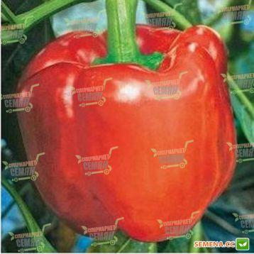Юпитер F1 семена перца сладкого (Syngenta)