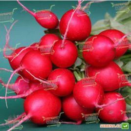 Кирше семена редиса раннего (Agri Saaten)
