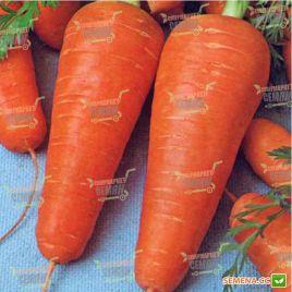 Курода семена моркови (Agri Saaten)