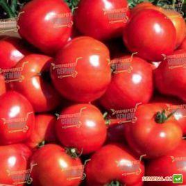 Орландо F1 семена томата дет. 70-80 гр. (Agri Saaten)