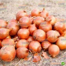 Роксен F1 семена лука репчатого озимого (Agri Saaten)