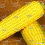 Свит Вондер F1 семена кукурузы суперсладкой (Agri Saaten)