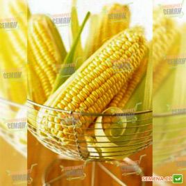 Вондерленд F1 семена кукурузы суперсладкой Sh2 средней 80-83дн. 24-25см (Agri Saaten)