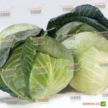 Акварель F1 семена капусты б/к среднепоздней (Bayer Nunhems)