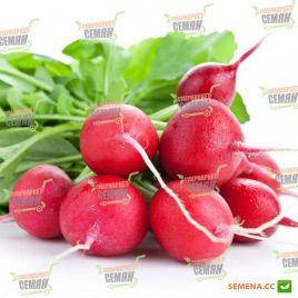 Дабел F1 семена редиса (Bayer Nunhems)