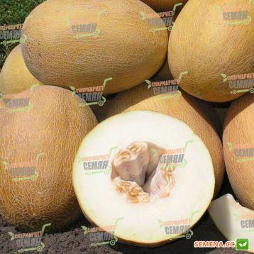 Делано F1 семена дыни тип Ананас ранней 63-65 дн. 2-3 кг овал. оран./бел. (Nunhems) НЕТ ТОВАРА