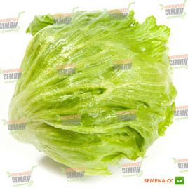 Гондар семена салата тип Айсберг зел. дражированные (Nunhems)