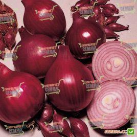 Кампилло F1 семена лука репчатого красного среднего (Bayer Nunhems)