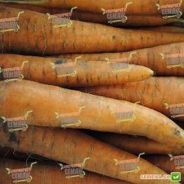 Лагуна F1 (прайм. 1,6-1,8) семена моркови Нантес ультраранней от 60 дн. (Nunhems)