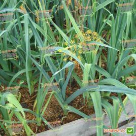 Лекстон F1 семена лука порей голубовато-зеленого (Nunhems) СНЯТО С ПРОИЗВОДСТВА
