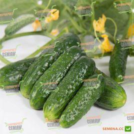 семена огурца проликс f1