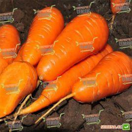 Ред Кор семена моркови Шантане ранней 75-85 дн. (Bayer Nunhems) НЕТ ТОВАРА