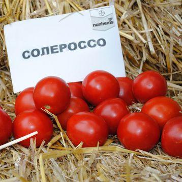 Солероссо F1 насіння томату дет. (Bayer Nunhems)