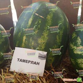 Тамерлан F1 семена арбуза тип Кримсон Свит среднепозднего 75-80 дн. 12-14 кг овал. (Nunhems)