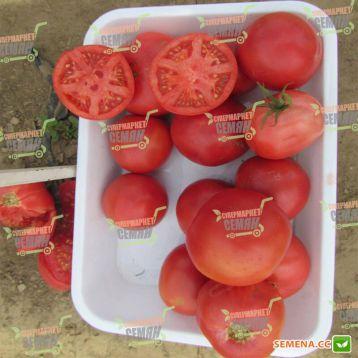 Тарпан F1 семена томата дет. розового (Bayer Nunhems)