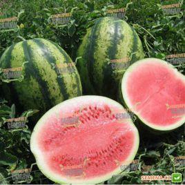 Виктория F1 семена арбуза тип кр.св. ультрараннего 56-60 дней 5-9 кг окр. (Nunhems)